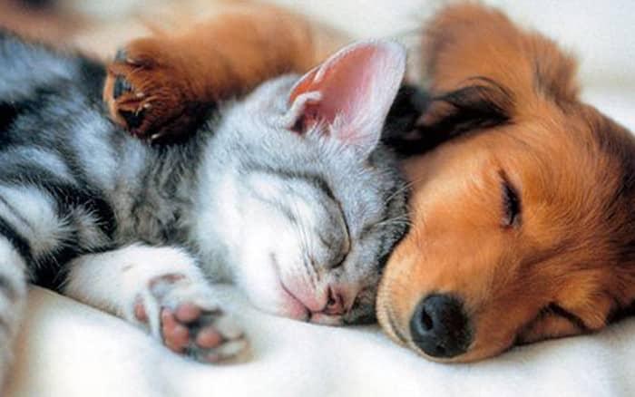 Wie funktioniert eine Tierkrankenversicherung? ClickVers!