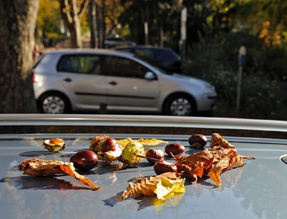 Kastanien-Hagel im Herbst