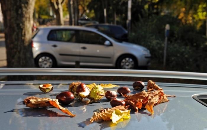 tipps fuer den alltag urteil parken auf eigene gefahr herabfallende eicheln-oder kastanien gehoeren