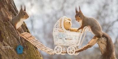 ClickVers-Hausratversicherung-Kinderwagen