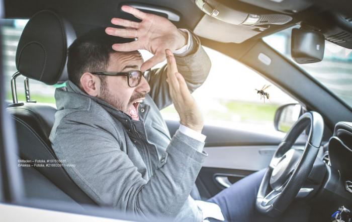 Wespe im PKW: Versicherung zahlt bei Unfall